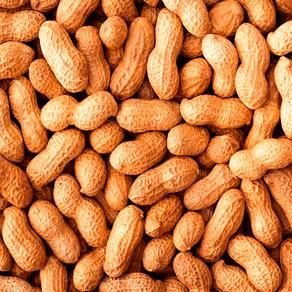 Amendoim-Runner-Torrado-Com-Casca-500g