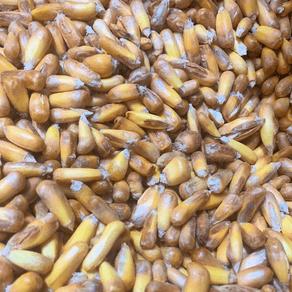 milho-frito